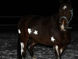 Reflektorspray für Pferde und Tiere